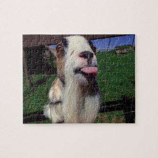 Casse-tête effrontée de nouveauté de chèvre puzzle
