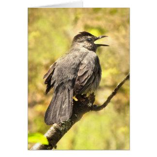 Catbird chantant à sa chanson la carte vierge