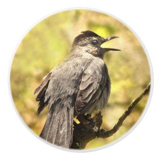 Catbird gris de chant bouton en céramique