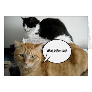 Chat humour cartes chat humour cartons d 39 cartons d for Carte de voeux humour