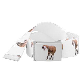 Ceinture Chèvre dans le repos
