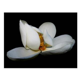centre de la scène de magnolia du sud carte postale