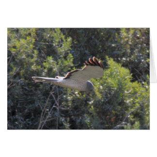 Cerf-volant : Oiseau de proie, carte