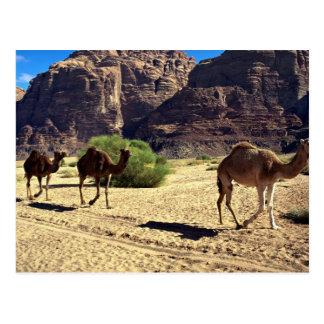Chameaux dans le désert du rhum de Wadi, désert de Carte Postale