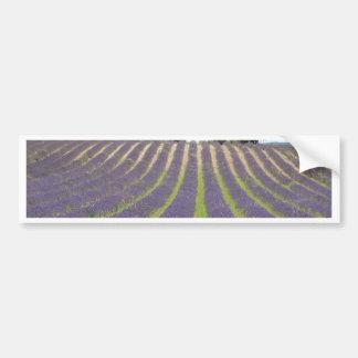 Champ de Lavendel en Provence Autocollant De Voiture