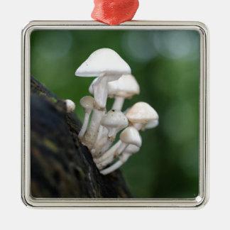 Champignon de porcelaine, mucida d'Oudemansiella Ornement Carré Argenté