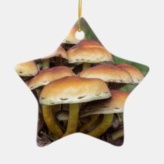 Champignons bruns de groupe dans la forêt de chute ornement étoile en céramique