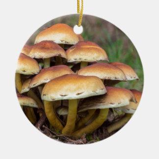 Champignons bruns de groupe dans la forêt de chute ornement rond en céramique