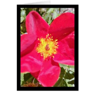Chanson florale de poinçon de velours de carte