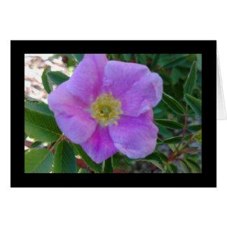 Chanson rose douce de fleur de solénoïde. Carte de