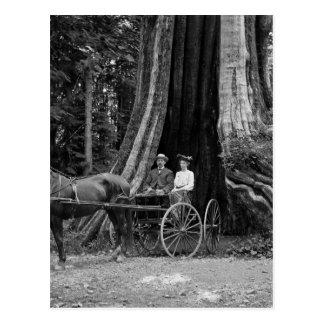 Chariot dans l'arbre creux carte postale