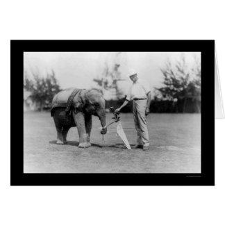 Chariot de golfeur et d'éléphant à Miami, FL 1922 Carte De Vœux
