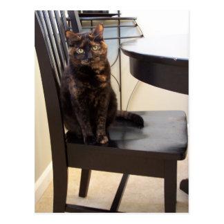chat à la chaise de table carte postale