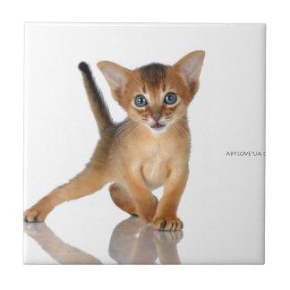 Chat abyssinien petit carreau carré