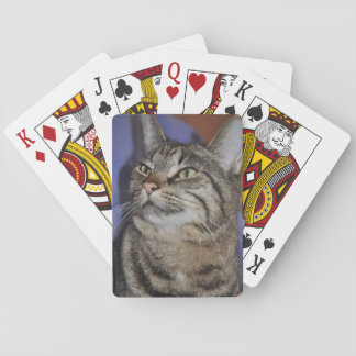 Chat Ami-Gris velu de rayure de tigre Jeu De Cartes