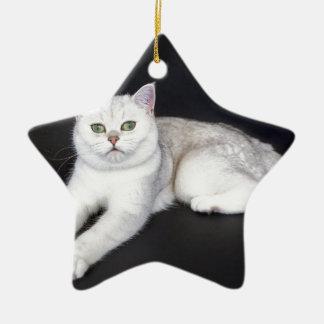 Chat blanc se trouvant sur l'arrière - plan noir ornement étoile en céramique
