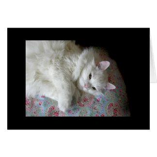 Chat blanc sur la carte d'édredon de Paisley