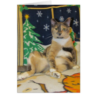 Chat, chaton, Noël, délivrance, photo Carte De Vœux