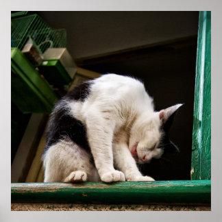 Chat dans la copie de fenêtre