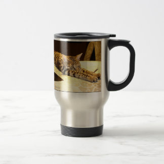 Chat de la savane réveillant la tasse