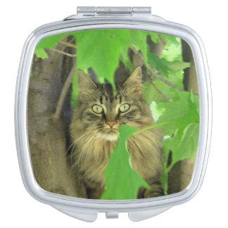 Chat de ragondin du Maine dans l'arbre