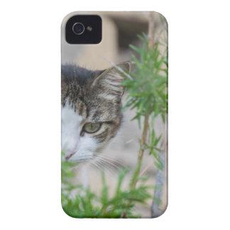 Chat mignon pour chaque jour coque Case-Mate iPhone 4