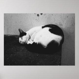 Chat noir et blanc