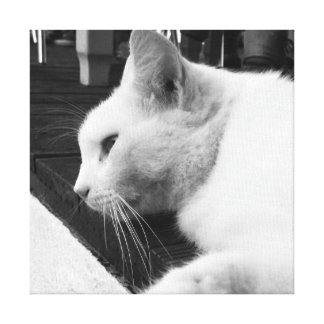 Chat noir et blanc toiles