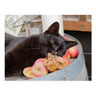 chat noir sur le vieux baril cartes postales