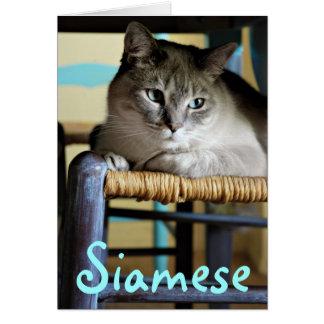 Chat siamois dans la chaise en osier antique carte