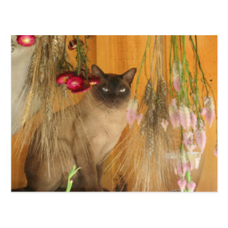 Chat siamois posant la carte postale animale #3 de