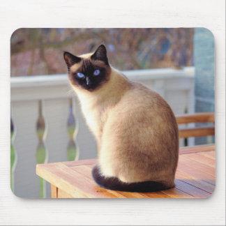 Chat siamois, tapis de souris d'yeux bleus
