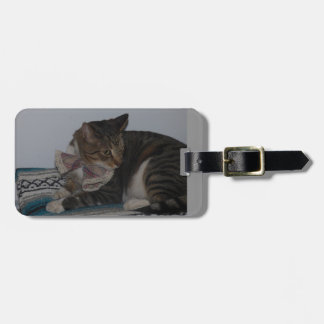 Chat tigré avec l'étiquette de bagage de cravate étiquette à bagage