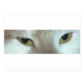 Chat tigré blanc et orange carte postale