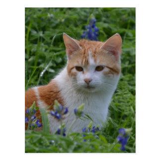 Chat tigré orange et blanc carte postale