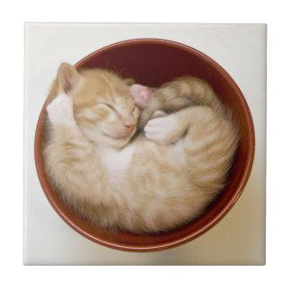Chaton de sommeil dans la cuvette rouge simple sur carreaux en céramique