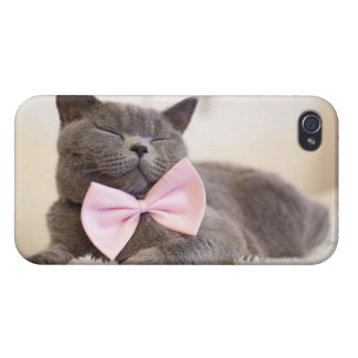 Chaton gris mignon coques iPhone 4/4S