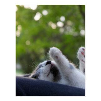 Chaton mignon de sommeil cartes postales