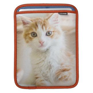 Chaton orange et blanc d'une chevelure moyen poches iPad