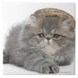 Chaton persan (2 mois) portant une paille carreau