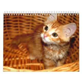 Chatons ! calendriers muraux