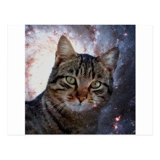 Chats dans l'espace carte postale