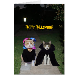 Chats drôles Halloween Carte