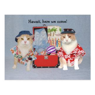 Chats drôles sur la croisière carte postale