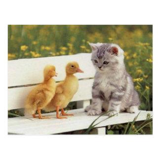 Chats précieux, cartes de chatons, cadeaux -
