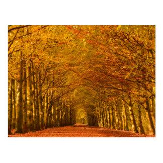 Chemin de marche à travers la forêt en carte