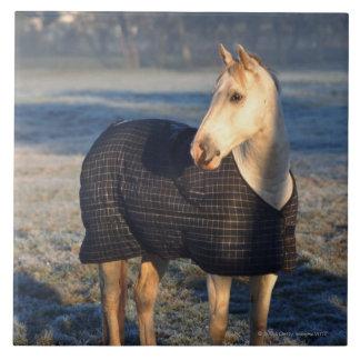 cheval grand carreau carré