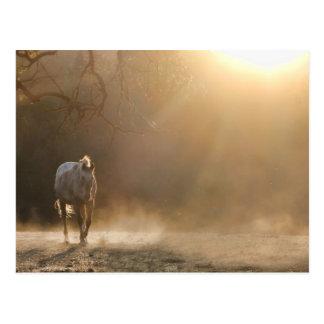 Cheval dans la carte postale de lumière du soleil