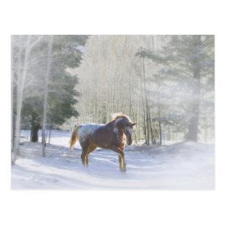 Cheval d'Appaloosa dans les Bonnes Fêtes de neige Carte Postale