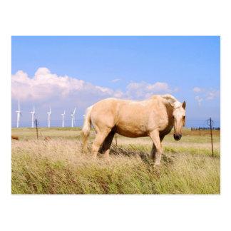 Cheval de palomino avec la carte postale de